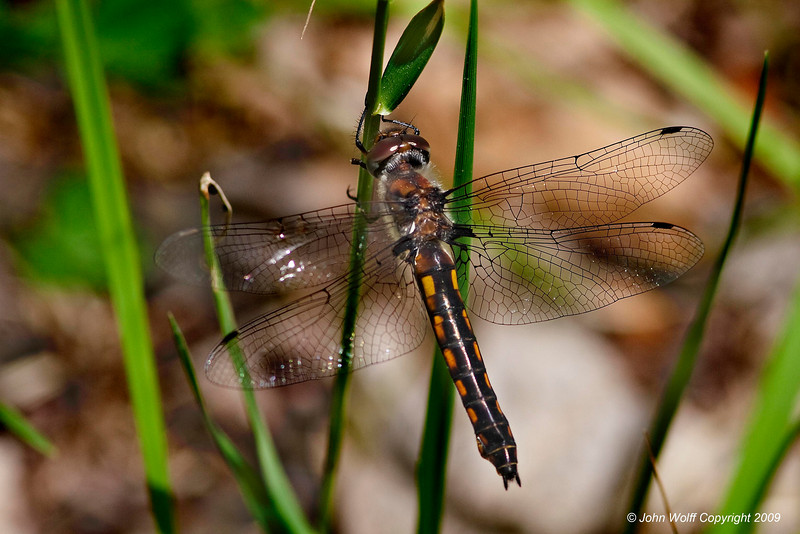 <b>baskettail</b>