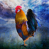 Rooster-01679-1235 Fver1-2