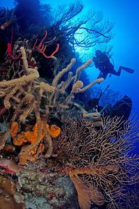 """""""The Aquarium"""" Dive Site at Long Caye, Belize"""