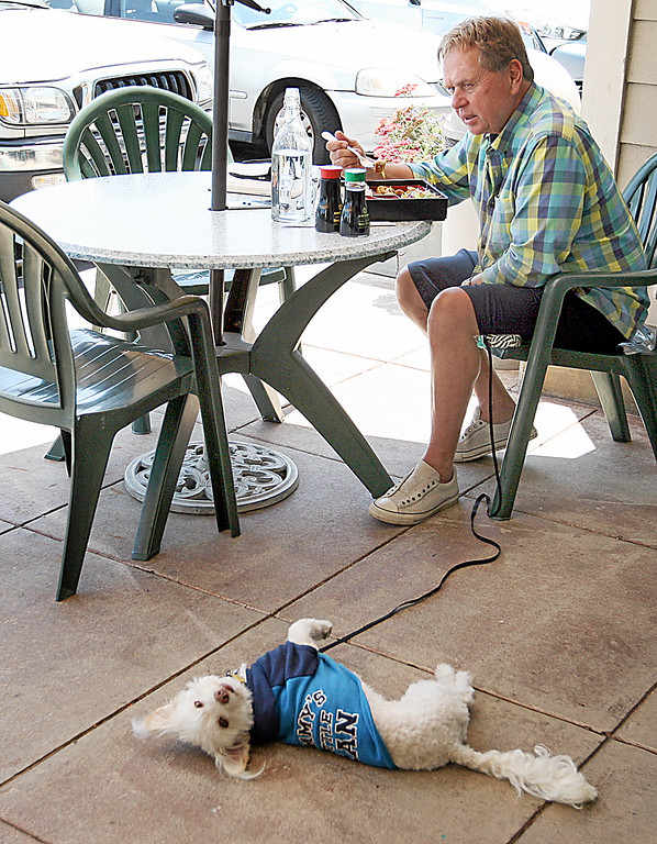 . Tom Mitchell enjoys the Benten Box lunch special while his dog Davis lounges at Wasabi Tapas in Capitola\'s Brown Ranch Marketplace. (Dan  Coyro -- Santa Cruz Sentinel)