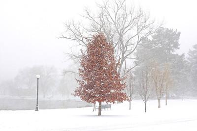 Wash Park Winter