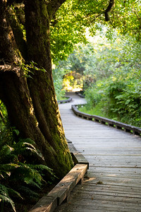 sunlit boardwalk out to the coast in a nature reserve