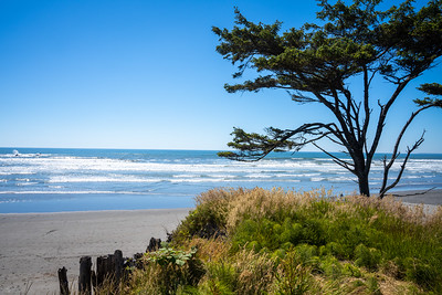 lone tree on the grass cliffs of the pacific ocean at kalaloch lodge