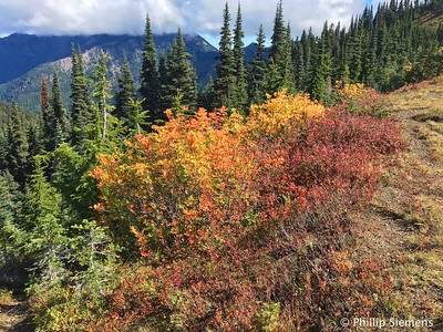 Fall color on Hurricane Ridge