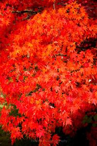Over Abundance of Red