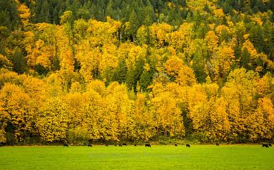 Fall Color Overload