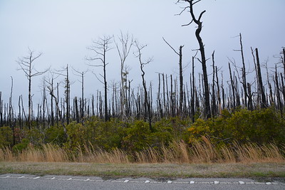 Results of the Forrest Fires