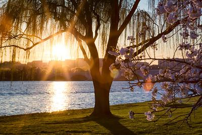 Sunset on The Potomac near the Lincoln Memorial, Arlington Memorial Bridge