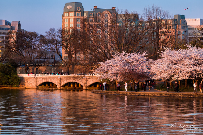 Cherry Blossom Bridge