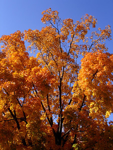 The Fall Colors - Washington, DC ... November 5, 2005 ... Photo by Rob Page III