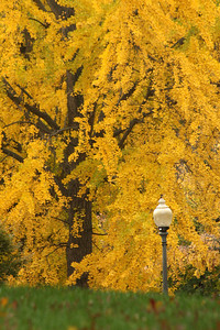 Autumn is upon us - Washington, DC ... November 6, 2008 ... Photo by Rob Page III