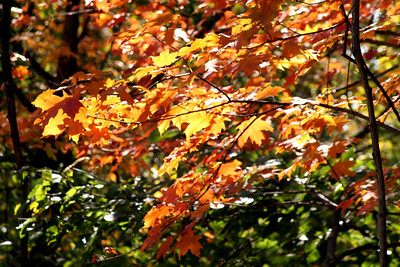 The colors are starting to creep into the leaves - Washington, DC ... October 19, 2008 ... Photo by Rob Page III