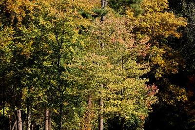 The fall colors in the Rock Creek Park - Washington, DC ... October 30, 2008 ... Photo by Rob Page III