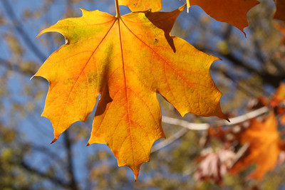 Fall is here - Washington, DC ... October 30, 2008 ... Photo by Rob Page III