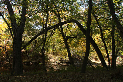 Along the Rock Creek - Washington, DC ... October 30, 2008 ... Photo by Rob Page III