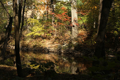 Down by the Rock Creek near the National Zoo - Washington, DC ... October 30, 2008 ... Photo by Rob Page III