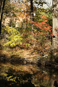 The Rock Creek near the National Zoo - Washington, DC ... October 30, 2008 ... Photo by Rob Page III