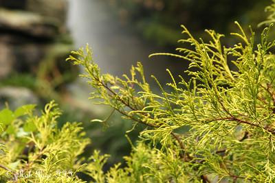Plants - Washington, DC ... October 27, 2009 ... Photo by Rob Page III