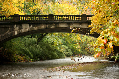 Down along Rock Creek - Washington, DC ... October 27, 2009 ... Photo by Rob Page III