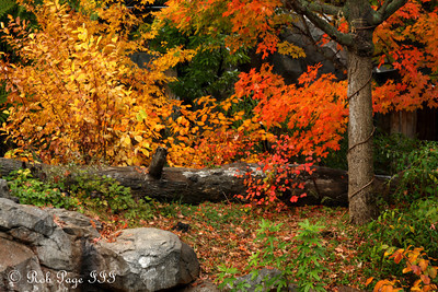 Fall folaige at the National Zoo - Washington, DC ... October 27, 2009 ... Photo by Rob Page III