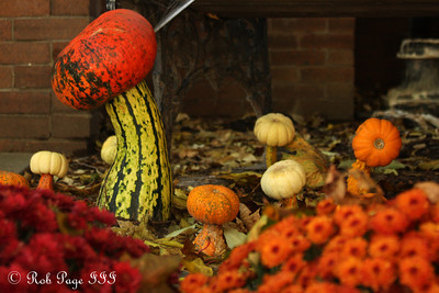 A mushroom forest - Washington, DC ... October 25, 2009 ... Photo by Rob Page III