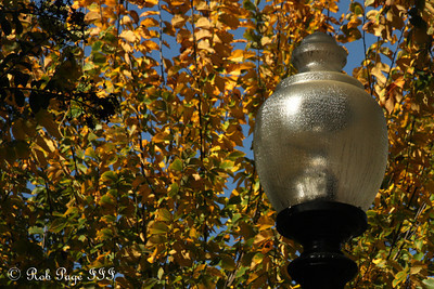 A lamp on a nice fall day - Washington, DC ... October 25, 2009 ... Photo by Rob Page III
