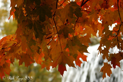 Fall colors - Washington, DC ... October 24, 2009 ... Photo by rob Page III