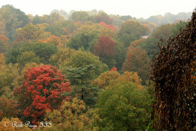 Fall foliage of Rock Creek - Washington, DC ... October 27, 2009 ... Photo by Rob Page III