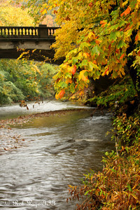 Along Rock Creek - Washington, DC ... October 27, 2009 ... Photo by Rob Page III