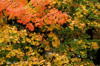 Fall foliage - Washington, DC ... October 27, 2009 ... Photo by Rob Page III