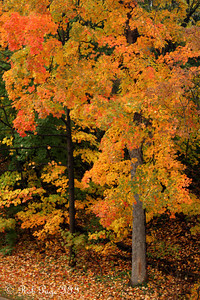 Autumn colors - Washington, DC ... October 27, 2009 ... Photo by Rob Page III