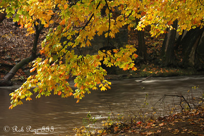 Foliage along the Rock Creek - Washington, DC ... October 27, 2009 ... Photo by Rob Page III