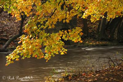 Foliage along the Rock Creek - Washington, DC ... October 27, 2009 ... Photo by Rob Page III