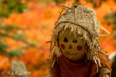 A scarecrow at the National Zoo - Washington, DC ... October 24, 2009 ... Photo by Rob Page III