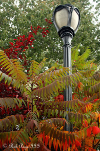 A light at the National Zoo - Washington, DC ... October 24, 2009 ... Photo by Rob Page III