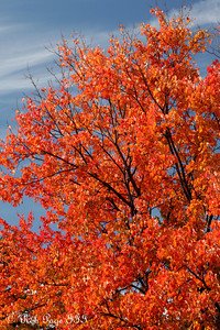 Fall colors - Washington, DC ... October 25, 2009 ... Photo by Rob Page III