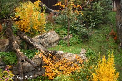 fall foliage at the National Zoo - Washington, DC ... October 27, 2009 ... Photo by Rob Page III