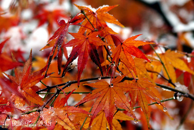 Autumn wears its fresh winter coat - Washington, DC ... December 5, 2009 ... Photo by Rob Page III