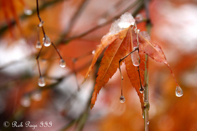 Winter coats Autumn - Washington, DC ... December 5, 2009 ... Photo by Rob Page III