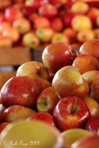 Fresh apples - Washington, DC ... November 15, 2009 ... Photo by Emily Page