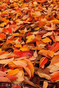 Autumn leaves - Washington, DC ... November 15, 2009 ... Photo by Rob Page III