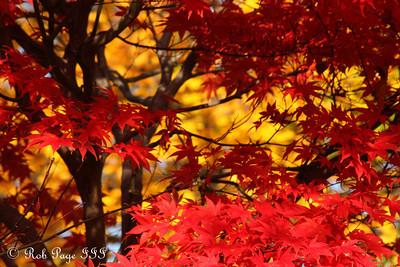 Fall colors right outside our house - Washington, DC ... November 15, 2009