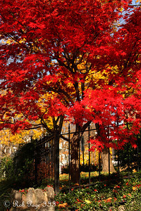 Fall colors right outside our door - Washington, DC ... November 15, 2009 ... Photo by Rob Page III