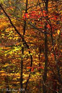 Fall colors in Rock Creek Park - Washington, DC ... November 8, 2009 ... Photo by Rob Page III