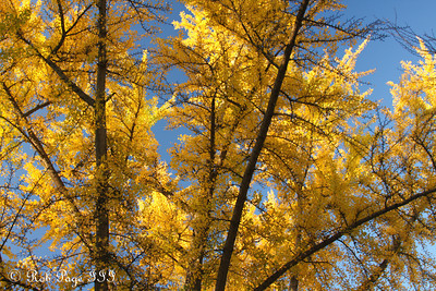 Autumn towers above - Washington, DC ... November 8, 2009 ... Photo by Rob Page III