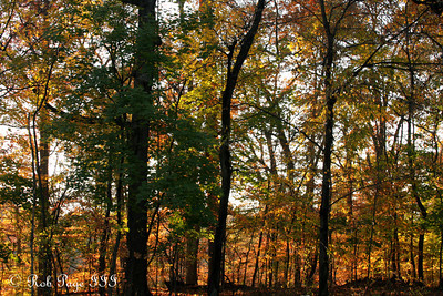 Rock Creek Park - Washington, DC ... November 8, 2009 ... Photo by Rob Page III