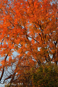 Fall colors - Washington, DC ... November 8, 2009 ... Photo by Rob page III