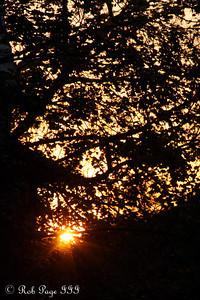 Sunset - Washington, DC ... November 8, 2009 ... Photo by Rob page III