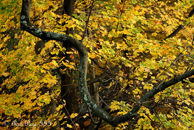 Colors in Rock Creek Park - Washington, DC ... November 8, 2009 ... Photo by Rob page III