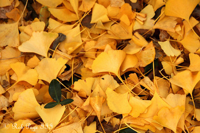 A yellow carpet - Washington, DC ... November 8, 2009 ... Photo by Rob Page III